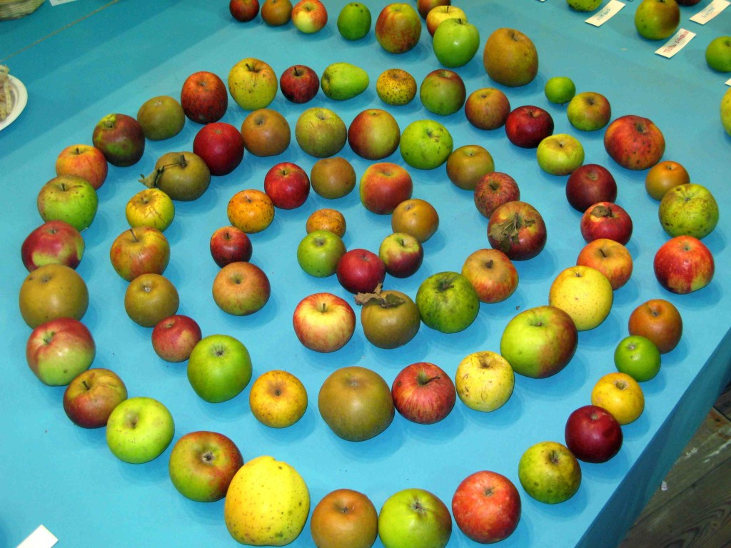 Jablka diverzita
